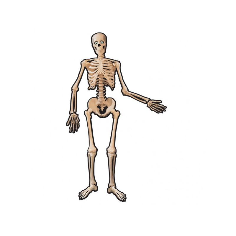 Izrez spojeni kostur